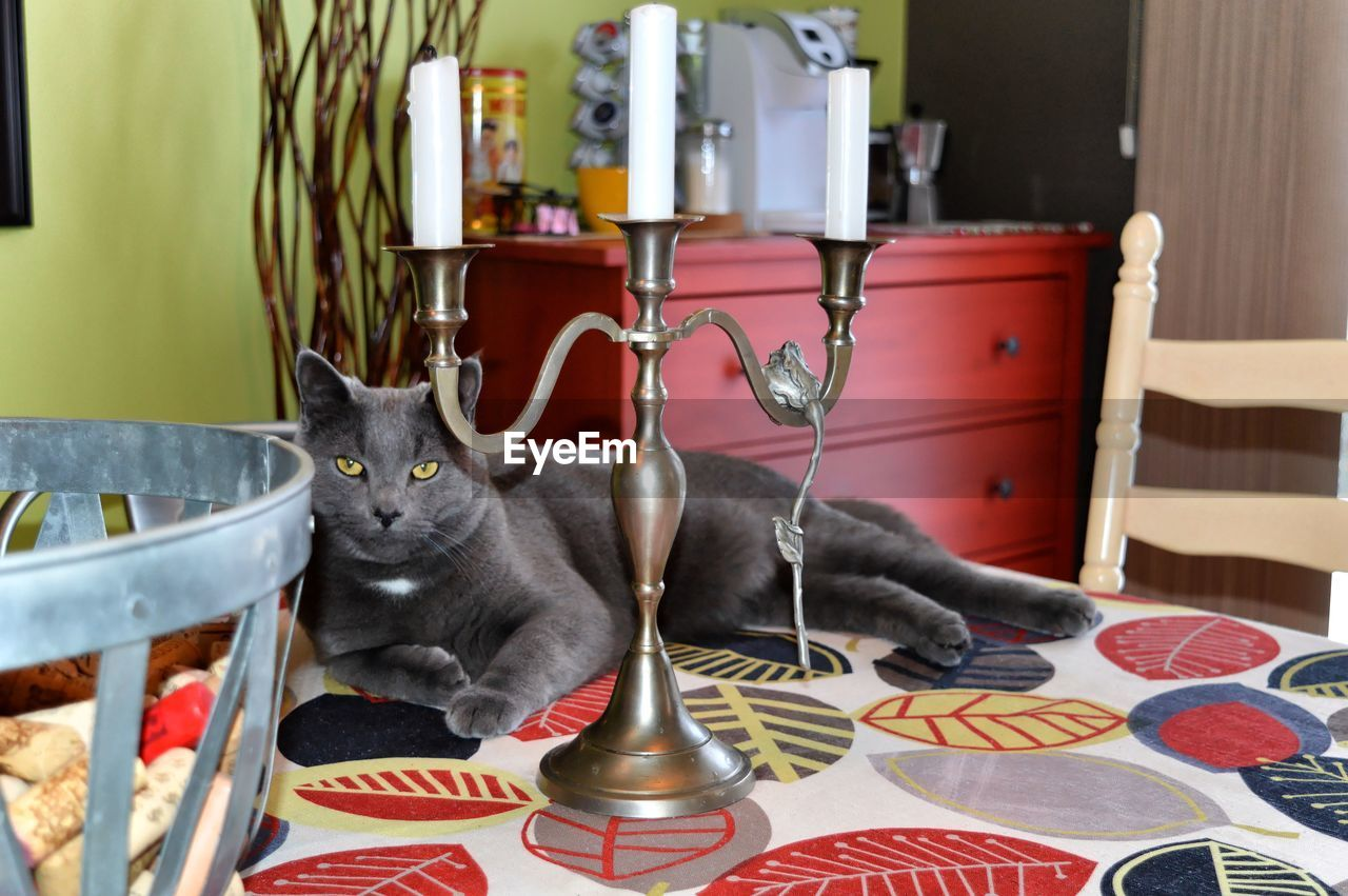 domestic, pets, domestic cat, mammal, cat, domestic animals, animal, feline, animal themes, one animal, vertebrate, no people, indoors, looking at camera, table, relaxation, home interior, portrait, whisker, focus on foreground