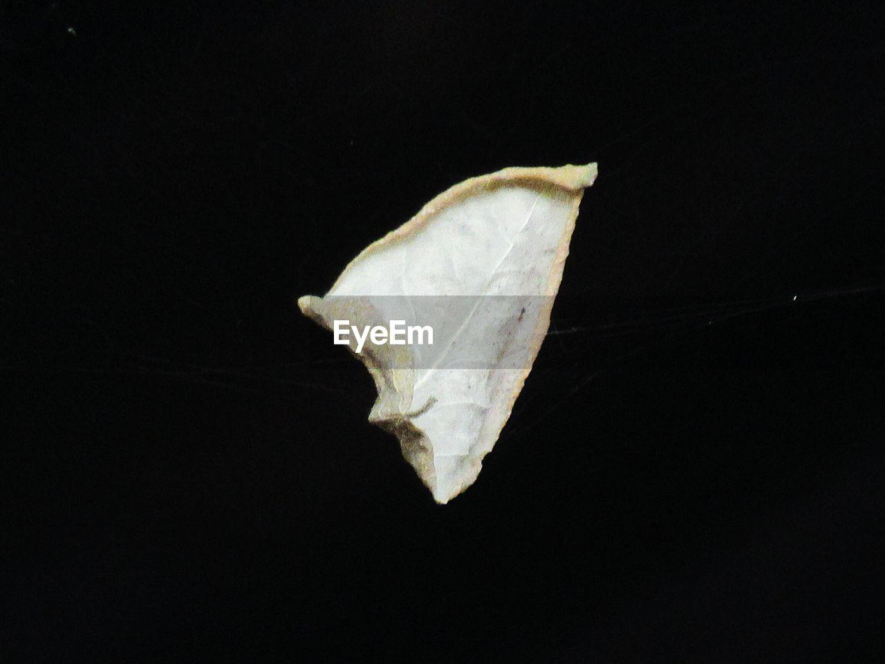 black background, leaf, single object, studio shot, no people, close-up, change, night, fragility, outdoors