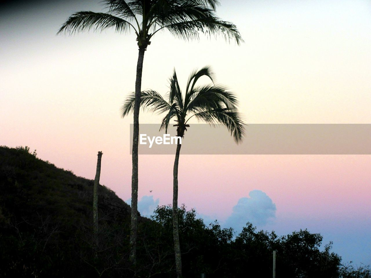 palm tree, tree, sunset, sky, tree trunk, silhouette, scenics, beauty in nature, low angle view, nature, growth, tranquil scene, clear sky, no people, tranquility, outdoors, palm frond, vacations, beach, tee, day