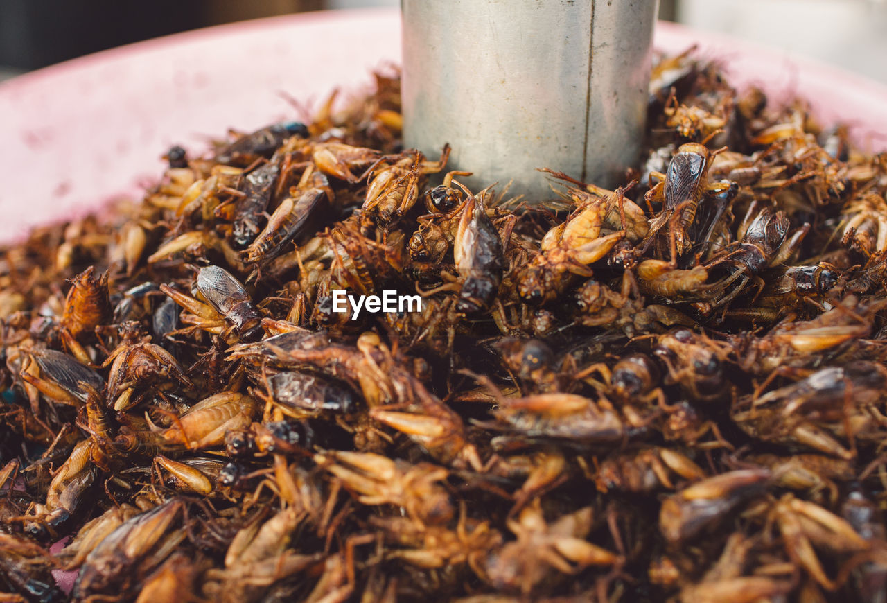Heap Of Crickets For Sale At Market