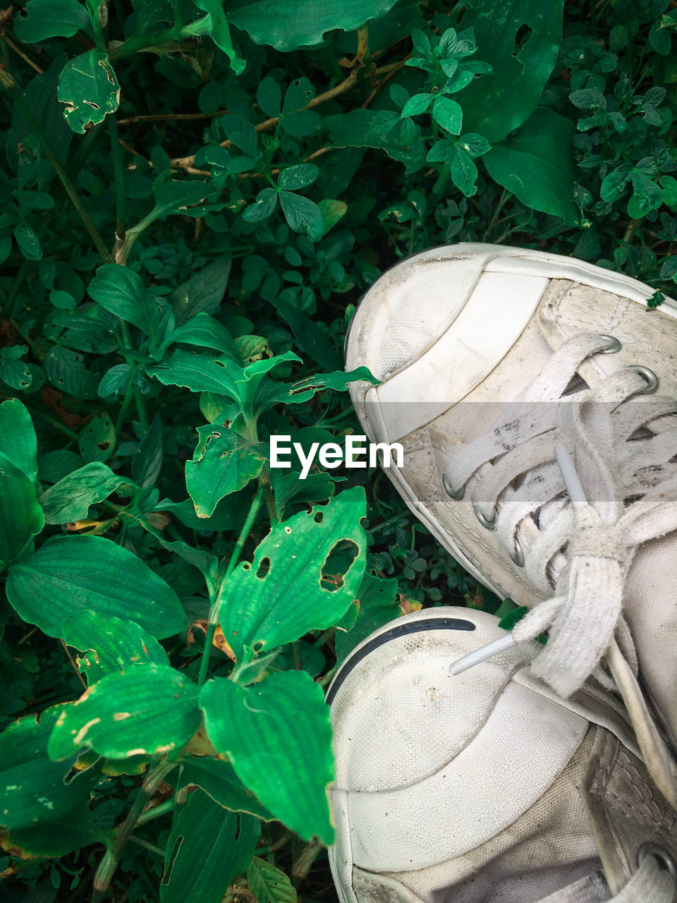 leaf, plant, statue, sculpture, outdoors, growth, no people, high angle view, day, green color, shoe, nature, close-up