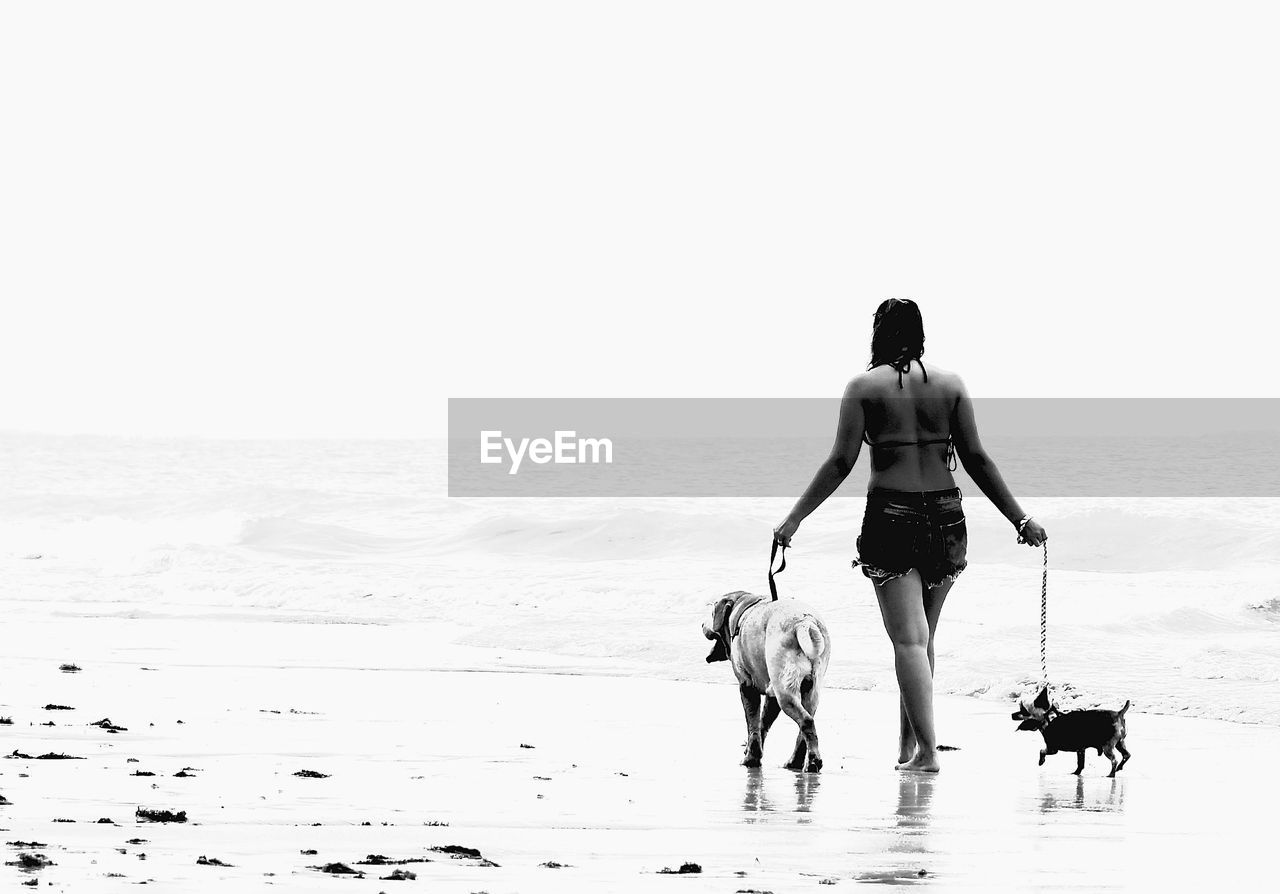 Rear view of woman walking with dogs at beach