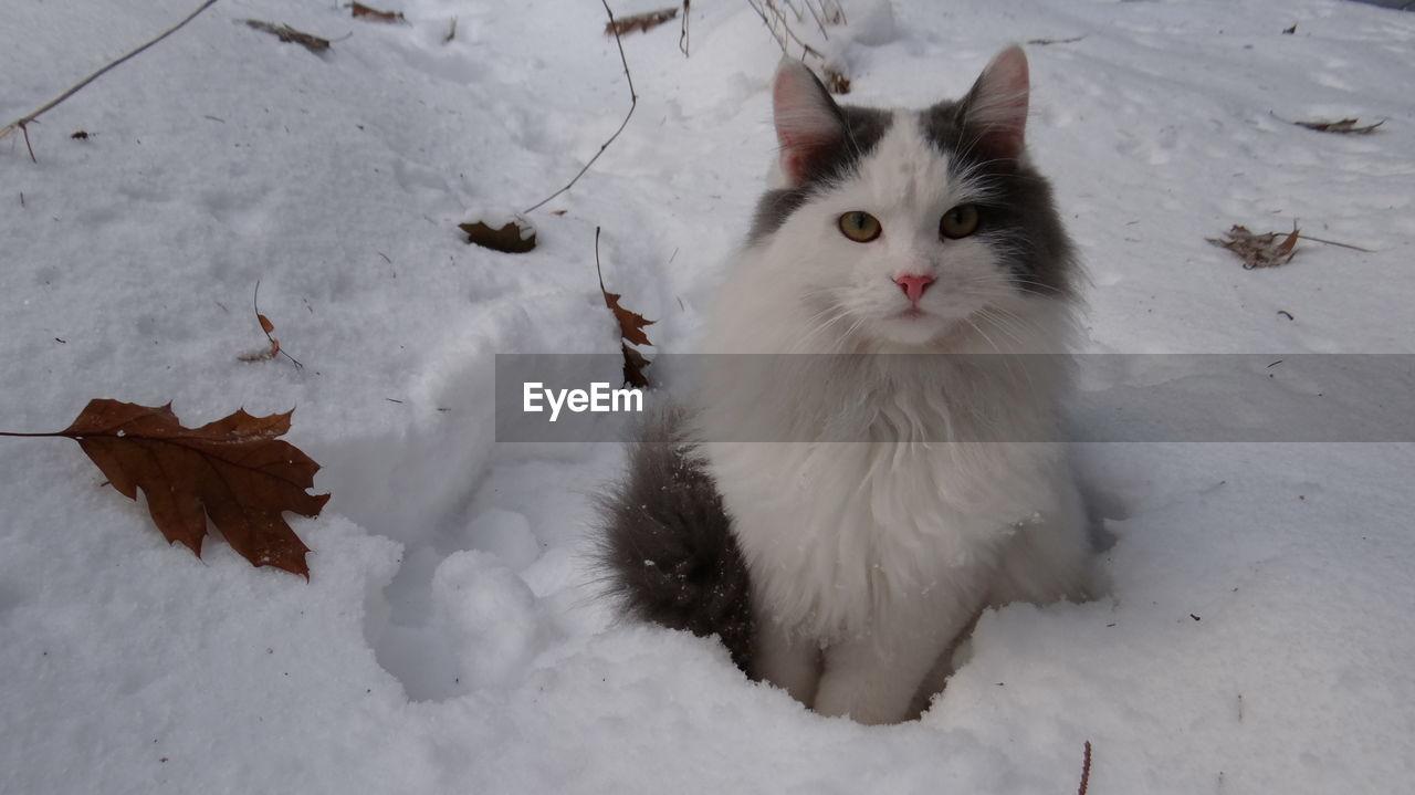 Portrait Of White Cat Sitting On Snow