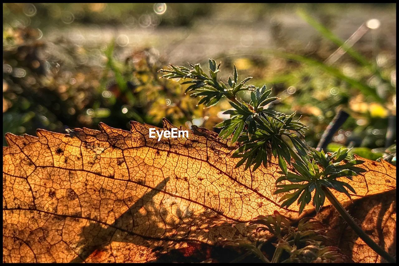 nature, outdoors, day, no people, focus on foreground, sunlight, beauty in nature, growth, tree, plant, leaf, close-up