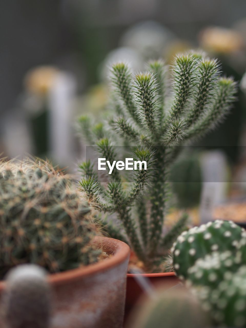 CLOSE-UP OF CACTUS PLANT IN POTTED PLANTS