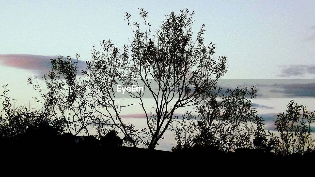 tree, silhouette, sky, nature, beauty in nature, scenics, outdoors, growth, cloud - sky, tranquil scene, sunset, tranquility, no people, landscape, low angle view, day, branch
