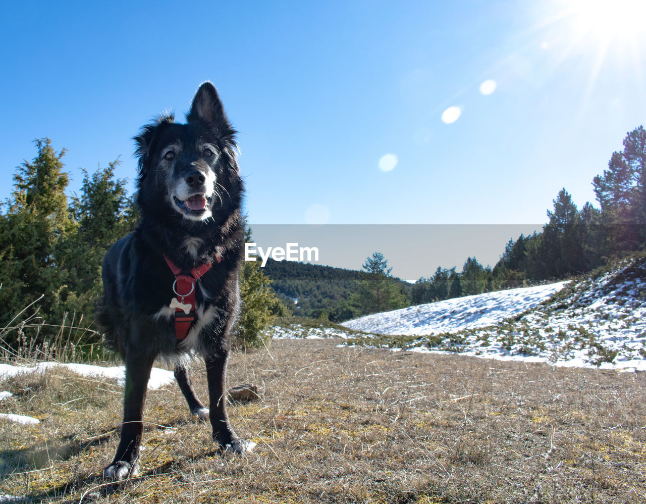 mammal, one animal, domestic animals, domestic, animal themes, pets, dog, canine, animal, sky, nature, vertebrate, day, snow, land, winter, sunlight, mountain, landscape, cold temperature, mouth open