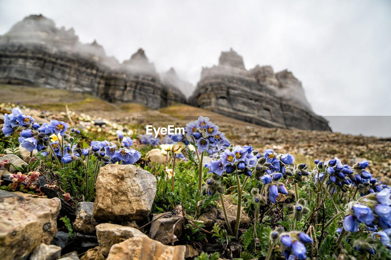 Purple Flowering Plants By Rocks On Field Against Sky