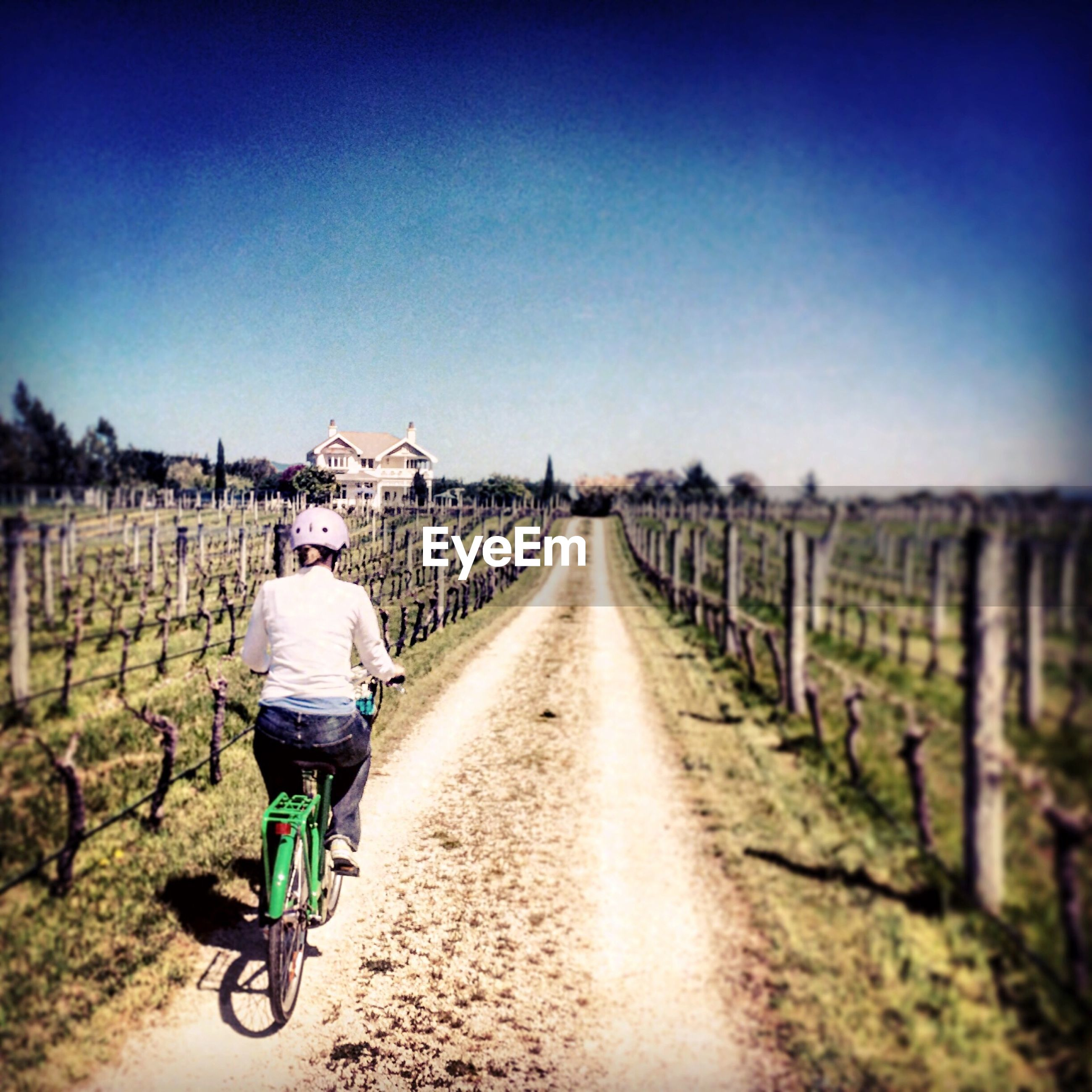 Rear view of woman riding bicycle on dirt road amidst vineyard against sky