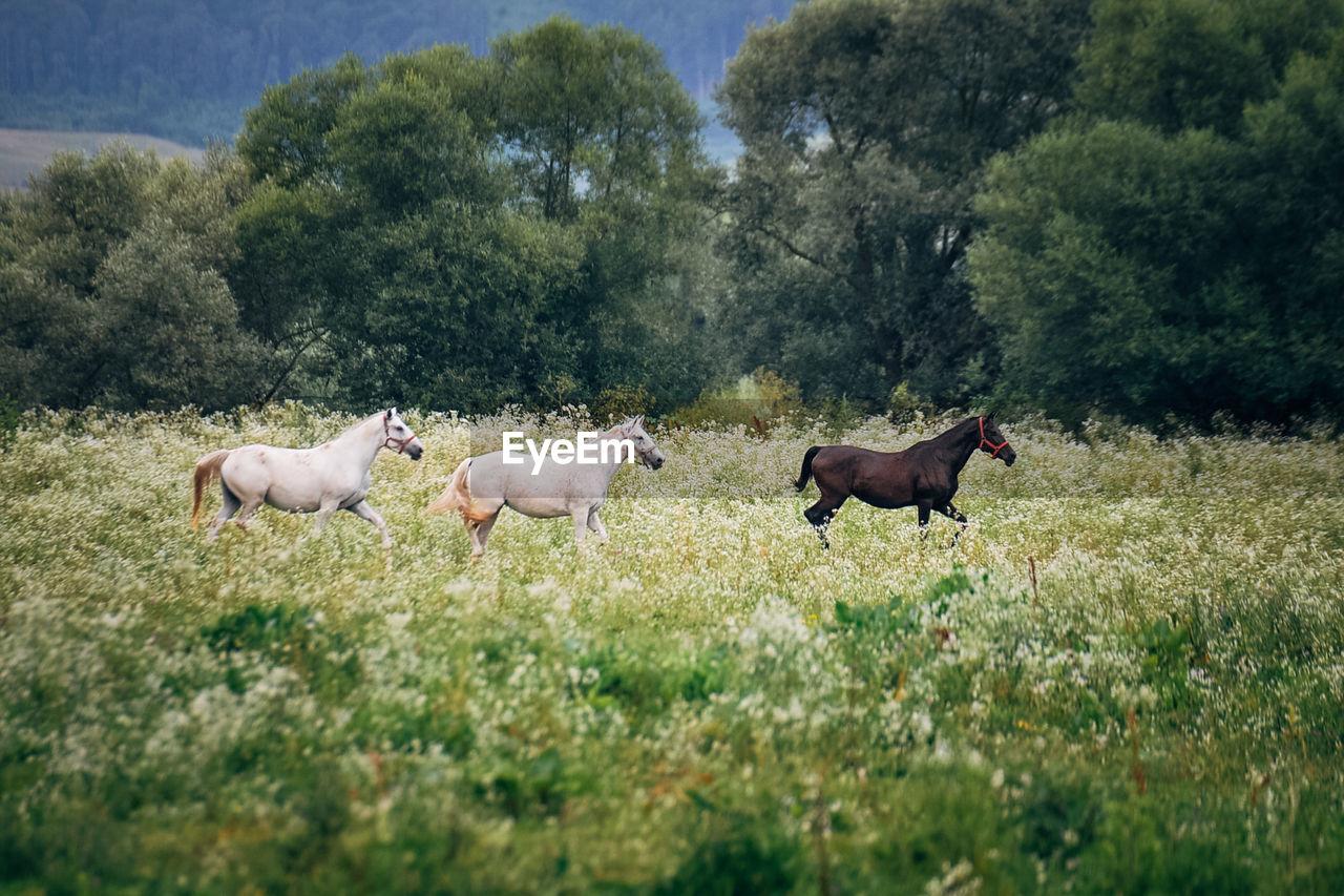 Horses on field against trees