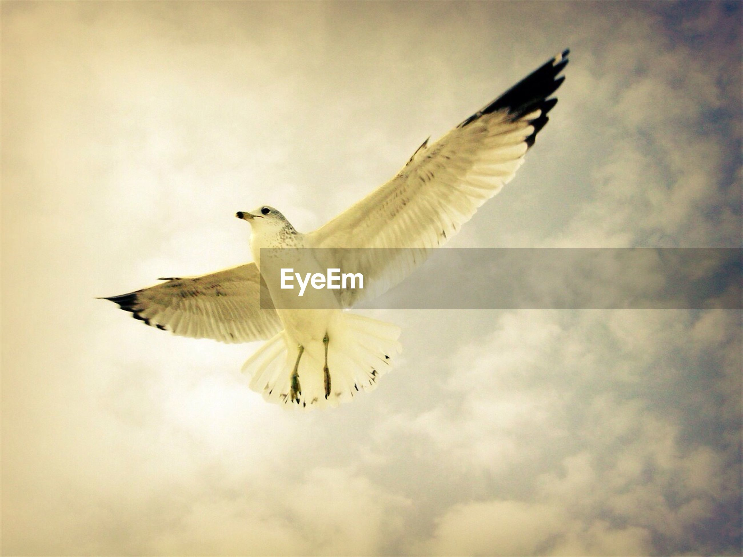 flying, animal themes, spread wings, animals in the wild, bird, one animal, wildlife, mid-air, low angle view, sky, on the move, seagull, animal wing, full length, flight, motion, cloud - sky, nature, outdoors, bird of prey