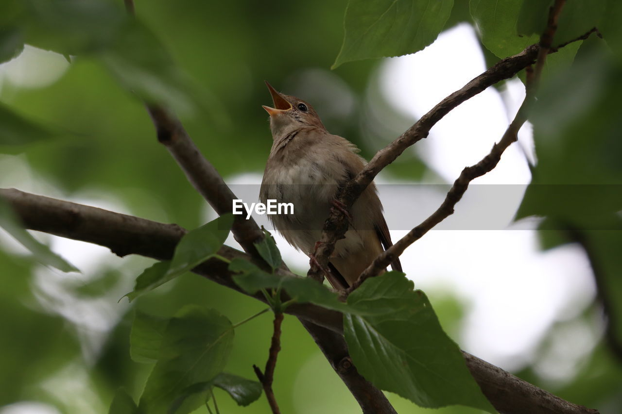 LOW ANGLE VIEW OF BIRD PERCHING ON A BRANCH