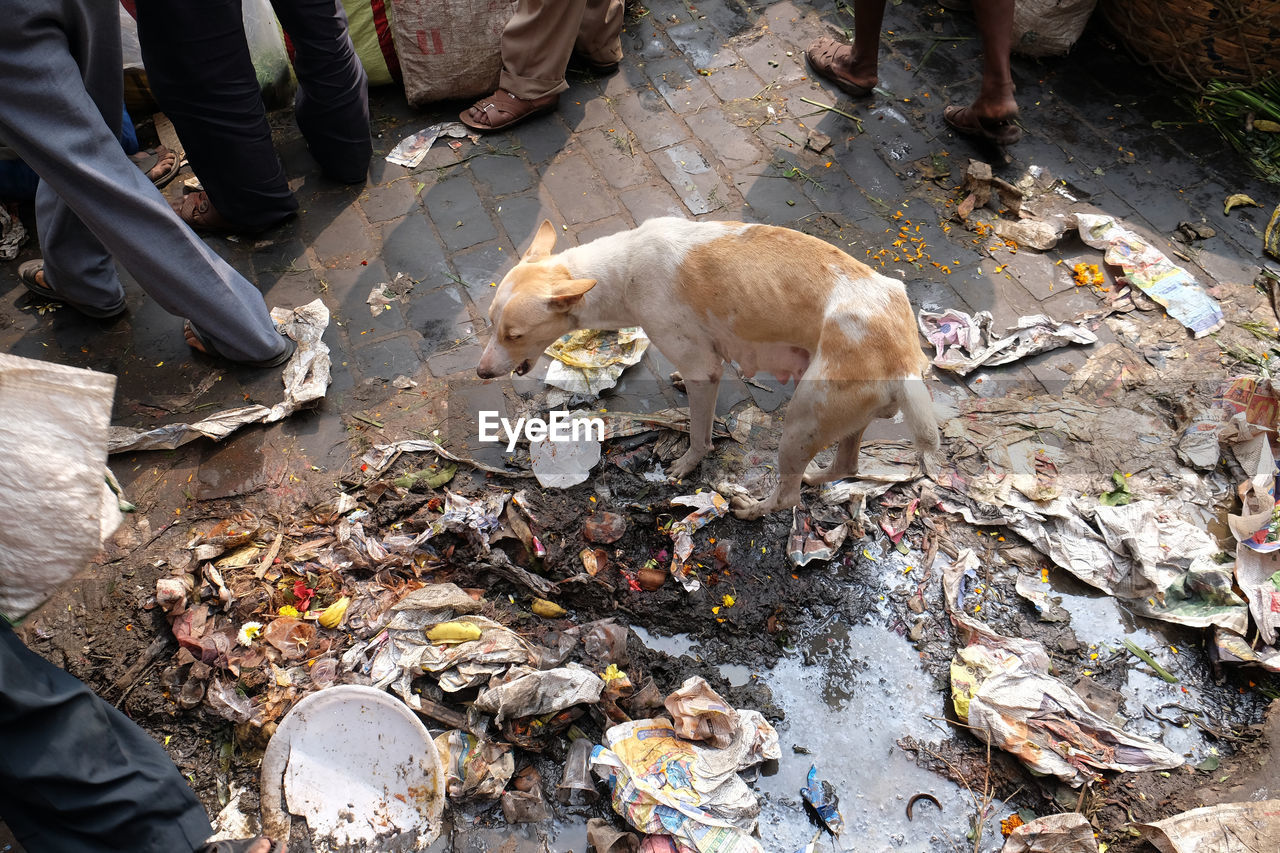 vertebrate, pets, mammal, low section, one animal, domestic animals, domestic, high angle view, real people, day, human leg, canine, dog, people, men, outdoors, human body part, messy