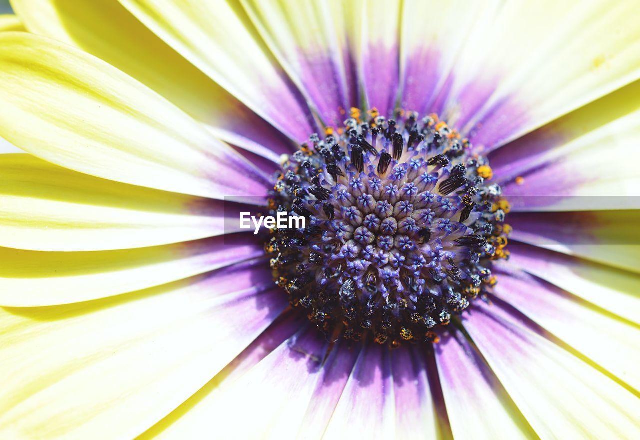 Detail of purple daisy flower