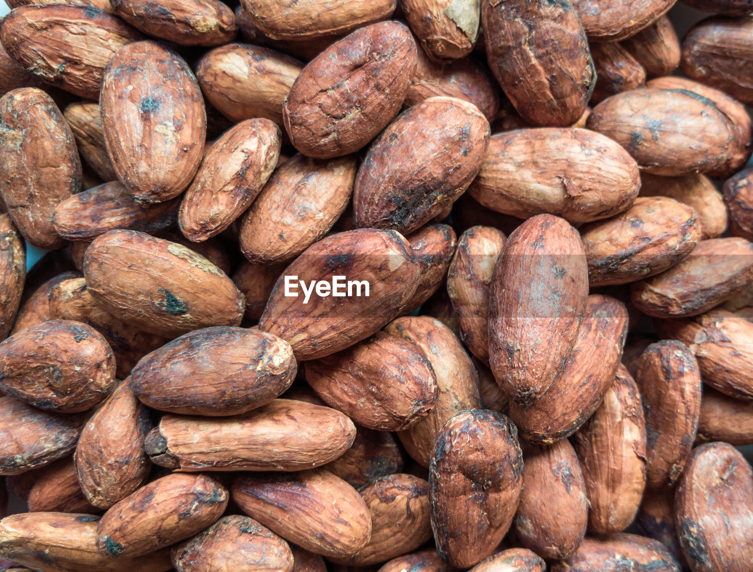 Cacao beans close up
