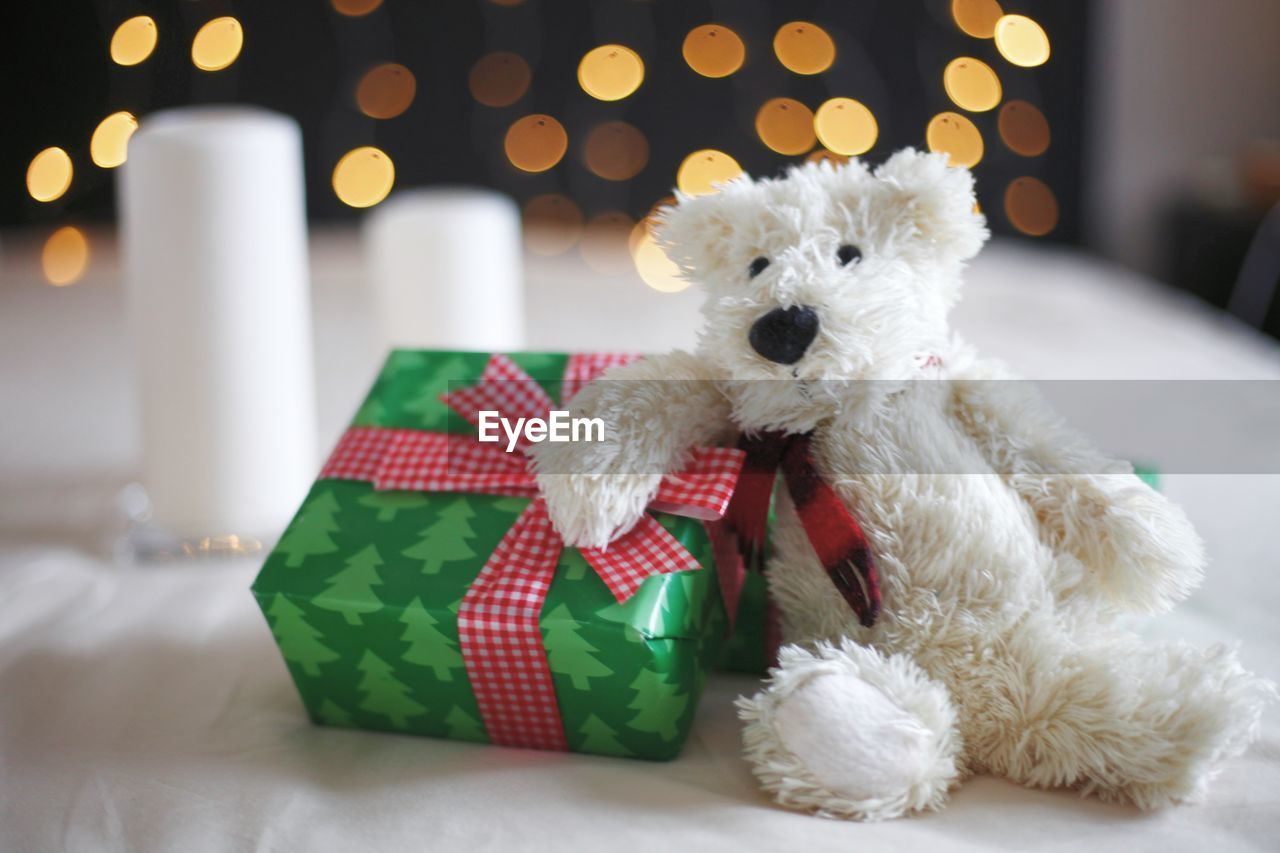 WHITE DOG IN A CHRISTMAS