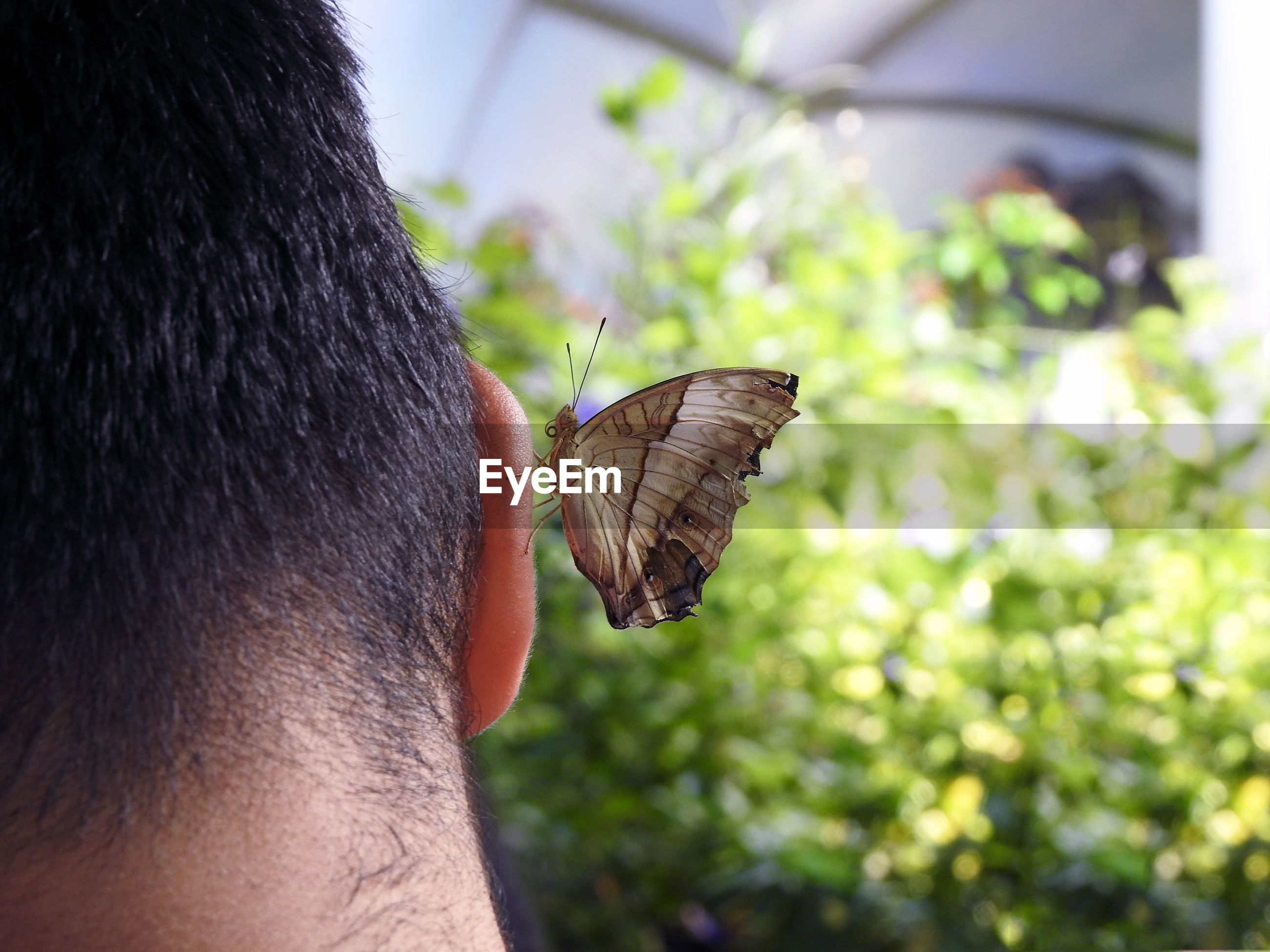 CLOSE-UP OF BUTTERFLY ON MAN