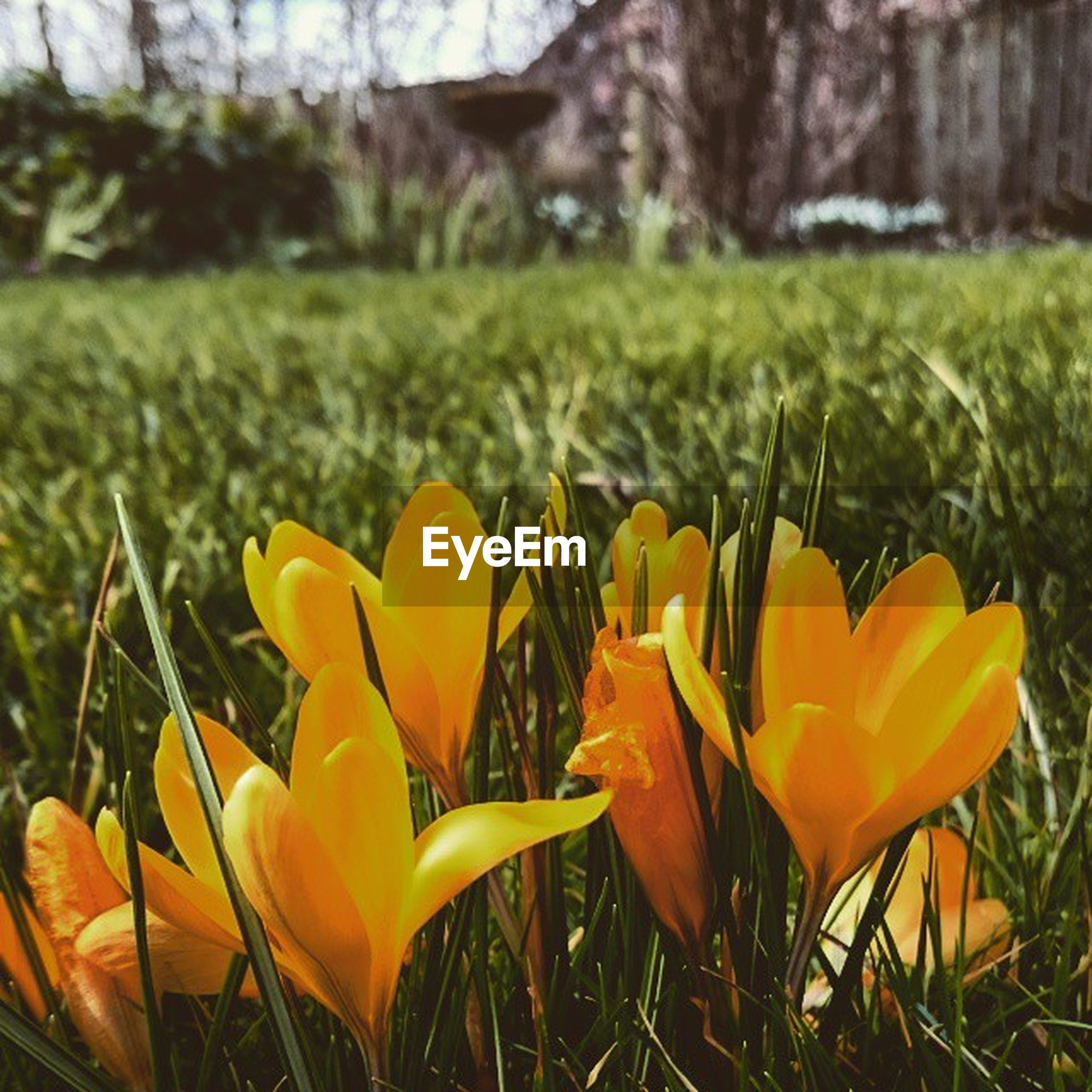 flower, petal, fragility, freshness, growth, flower head, focus on foreground, beauty in nature, yellow, field, close-up, nature, blooming, plant, grass, stem, in bloom, pollen, day, no people
