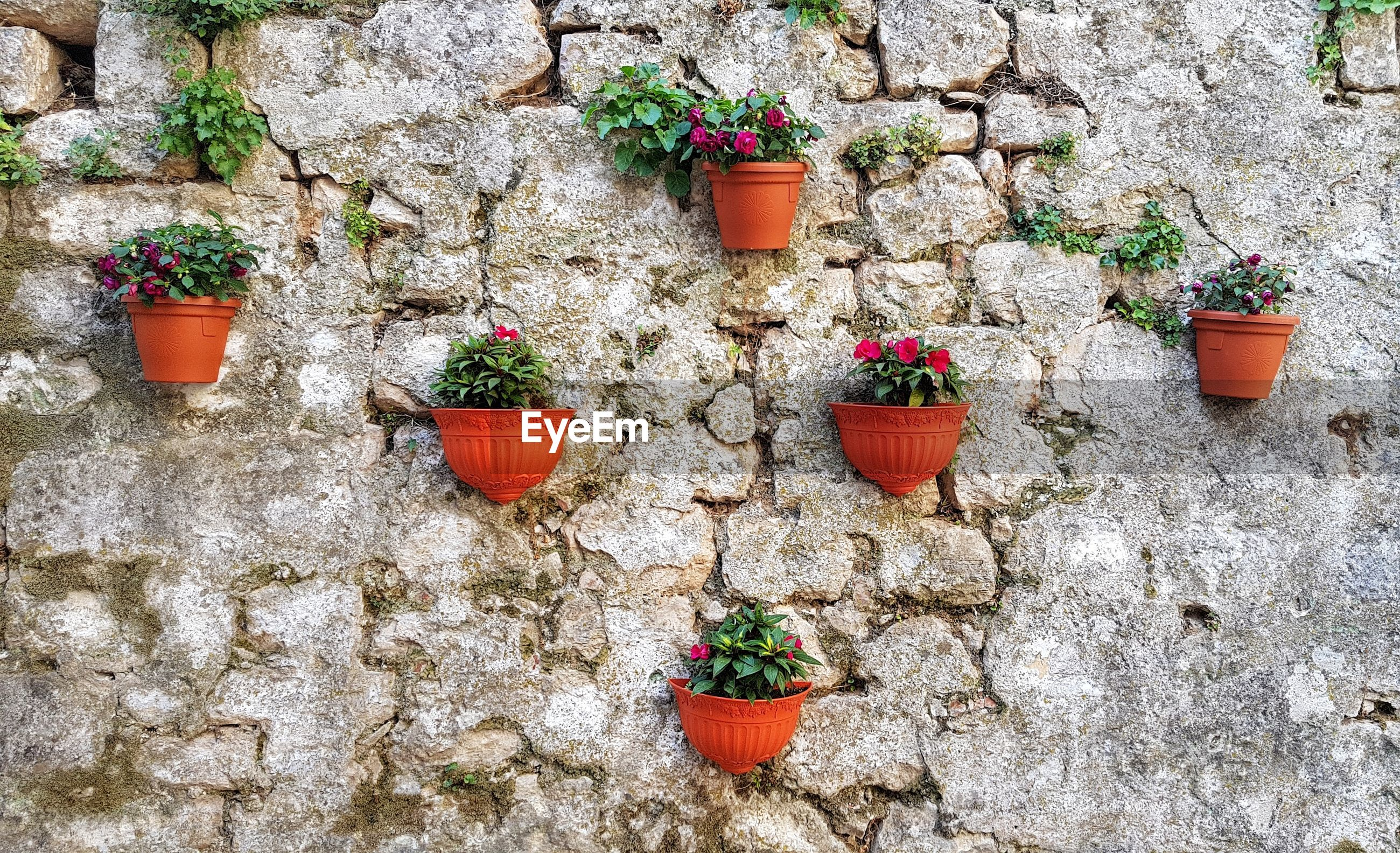 Potted plants hanging on wall