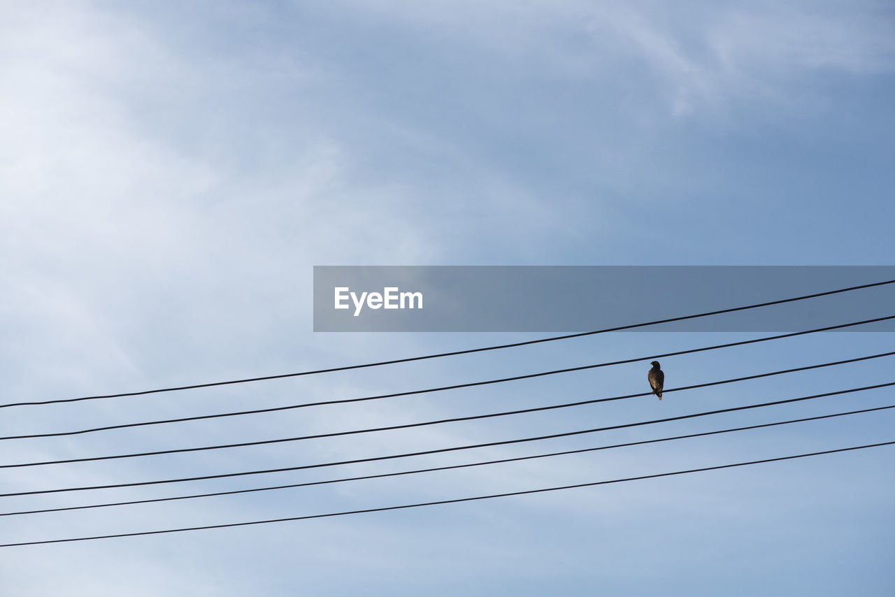cable, low angle view, sky, electricity, cloud - sky, power line, animal themes, animal, animals in the wild, vertebrate, bird, animal wildlife, connection, power supply, nature, technology, day, no people, perching, one animal, outdoors, telephone line, electrical equipment