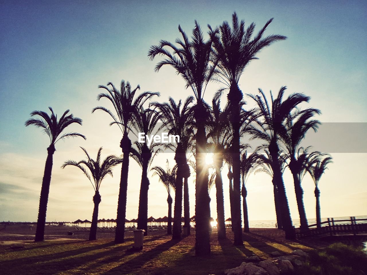 LOW ANGLE VIEW OF PALM TREES ON LANDSCAPE AGAINST SKY