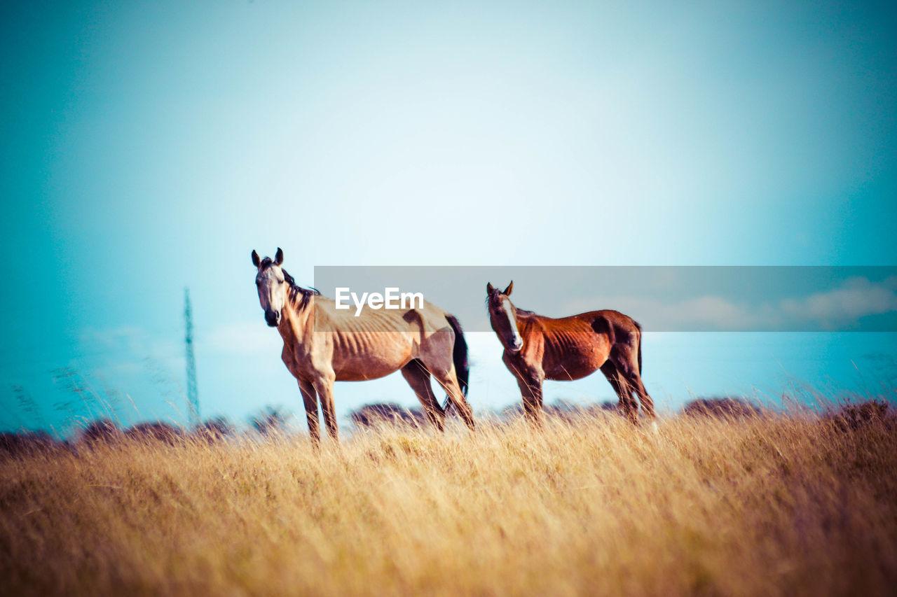 Horses standing on grassy field against sky