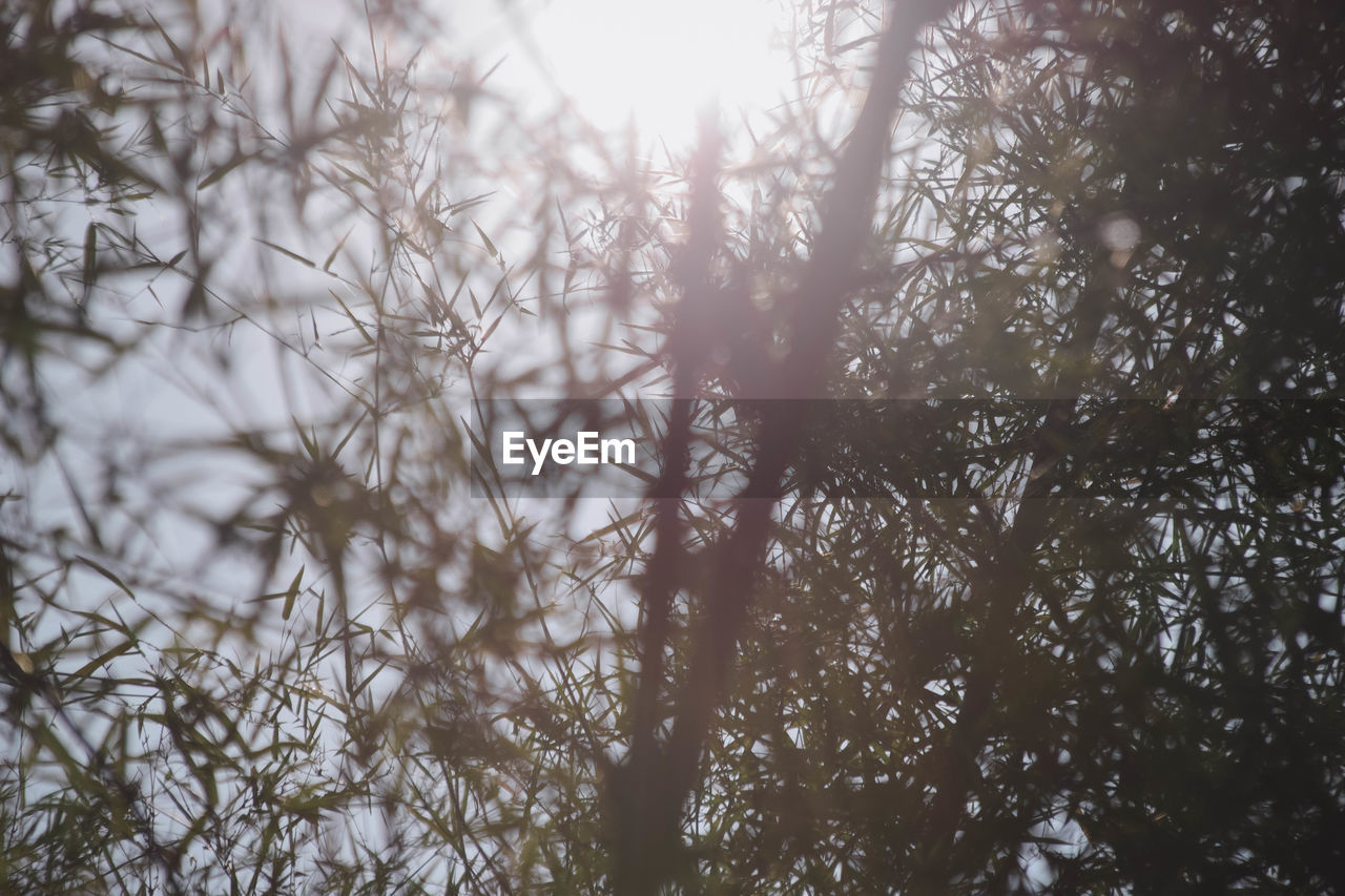 plant, tree, growth, nature, forest, day, beauty in nature, tranquility, no people, land, outdoors, selective focus, branch, low angle view, full frame, sunlight, close-up, non-urban scene, fog, coniferous tree