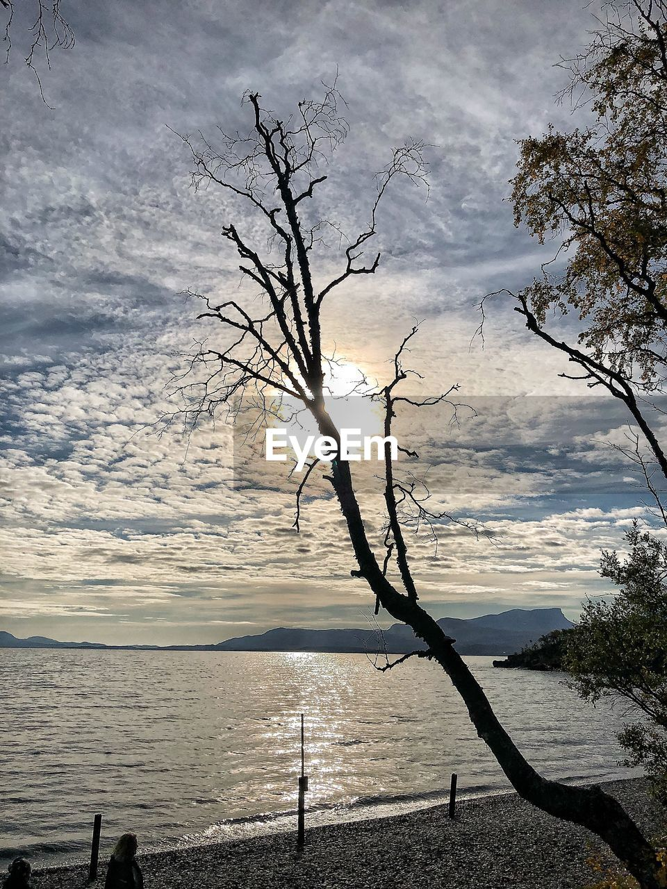 water, sky, cloud - sky, tree, sea, beauty in nature, tranquility, scenics - nature, tranquil scene, nature, plant, bare tree, land, no people, beach, branch, day, outdoors, horizon, horizon over water
