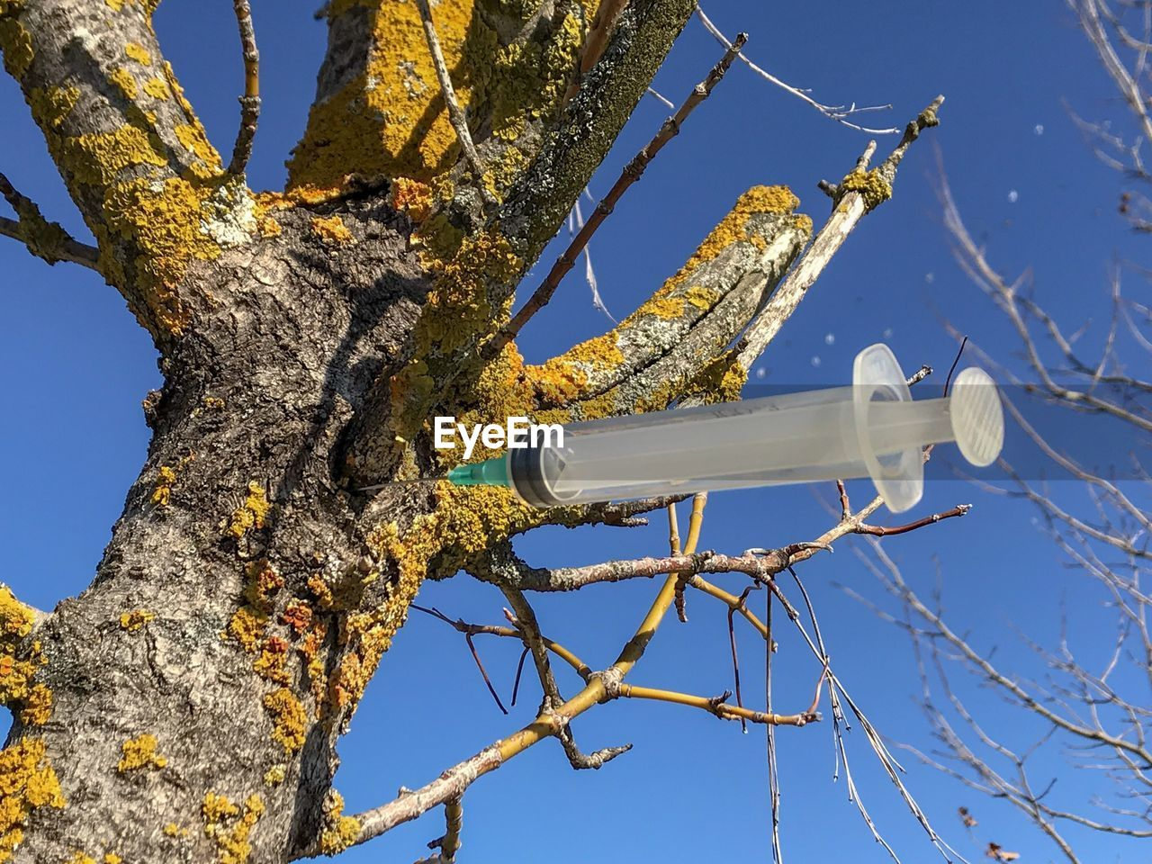 low angle view, no people, sunlight, day, blue, outdoors, close-up, tree, branch, nature, clear sky, technology, sky
