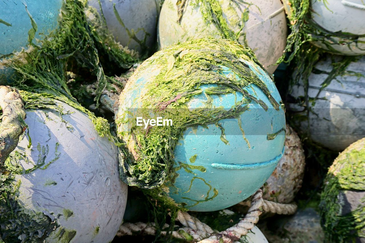 no people, day, high angle view, close-up, plant, outdoors, nature, green color, obsolete, land, abandoned, group of objects, field, old, still life, food and drink, buoy, food, water, container