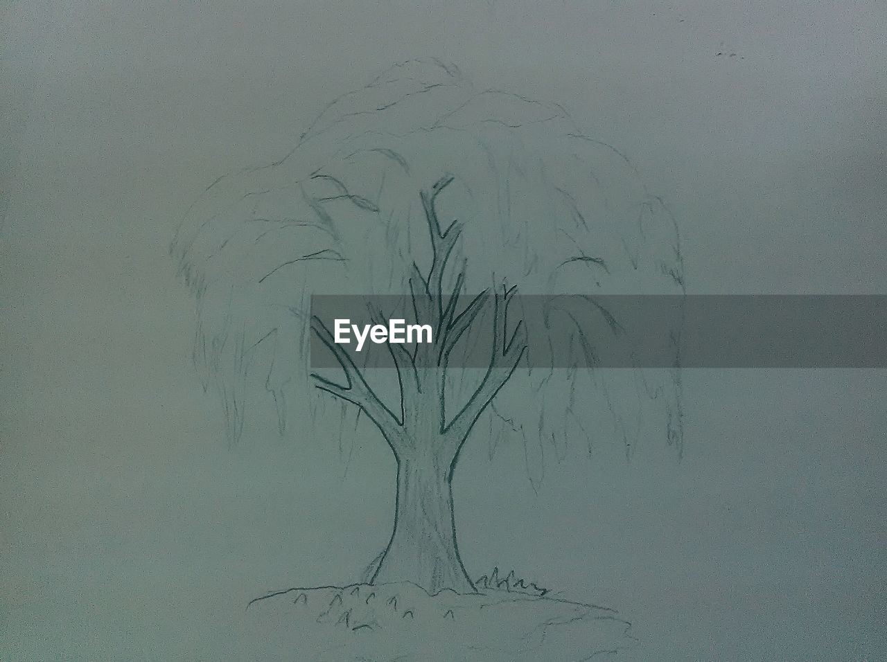 tree, bare tree, nature, growth, pencil drawing, branch, beauty in nature, no people, outdoors, day, close-up