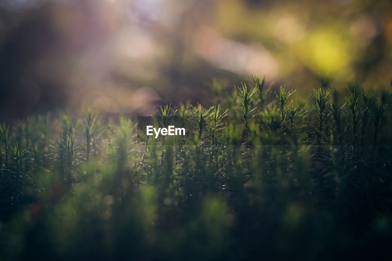 growth, nature, plant, selective focus, field, grass, tranquility, no people, close-up, outdoors, beauty in nature, day