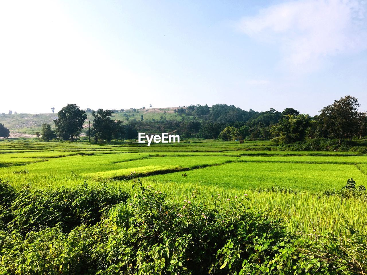 landscape, sky, plant, green color, land, beauty in nature, tranquil scene, scenics - nature, environment, field, growth, nature, tree, tranquility, rural scene, day, agriculture, no people, grass, farm, outdoors