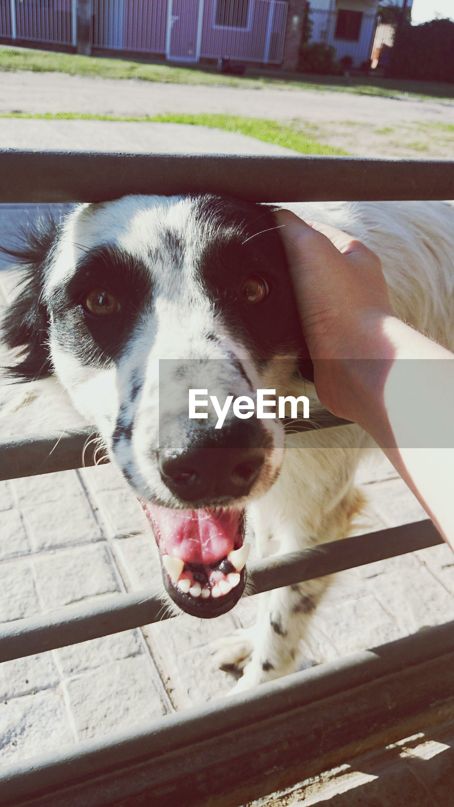 domestic animals, animal themes, one animal, pets, mammal, dog, animal head, part of, close-up, one person, relaxation, person, sitting, animal body part, pet collar, indoors, zoology, lying down, looking at camera