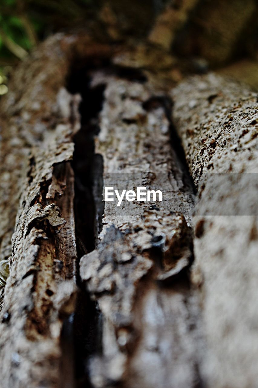 textured, selective focus, close-up, rough, no people, tree trunk, nature, day, bark, lichen, outdoors, fungus, toadstool, dead tree