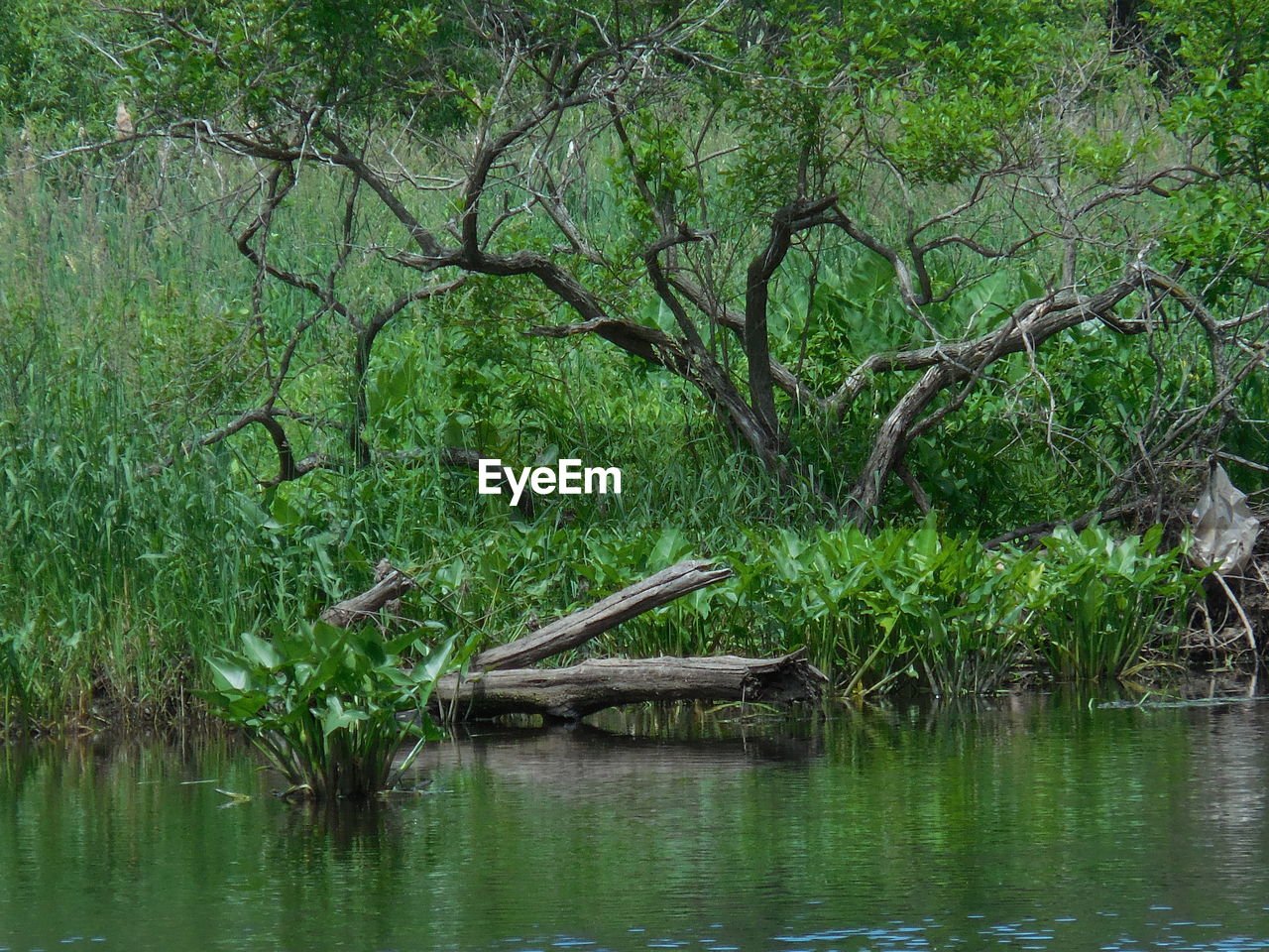 plant, tree, water, nature, animals in the wild, animal wildlife, animal themes, green color, no people, animal, lake, day, tranquility, forest, waterfront, vertebrate, one animal, bird, branch, outdoors