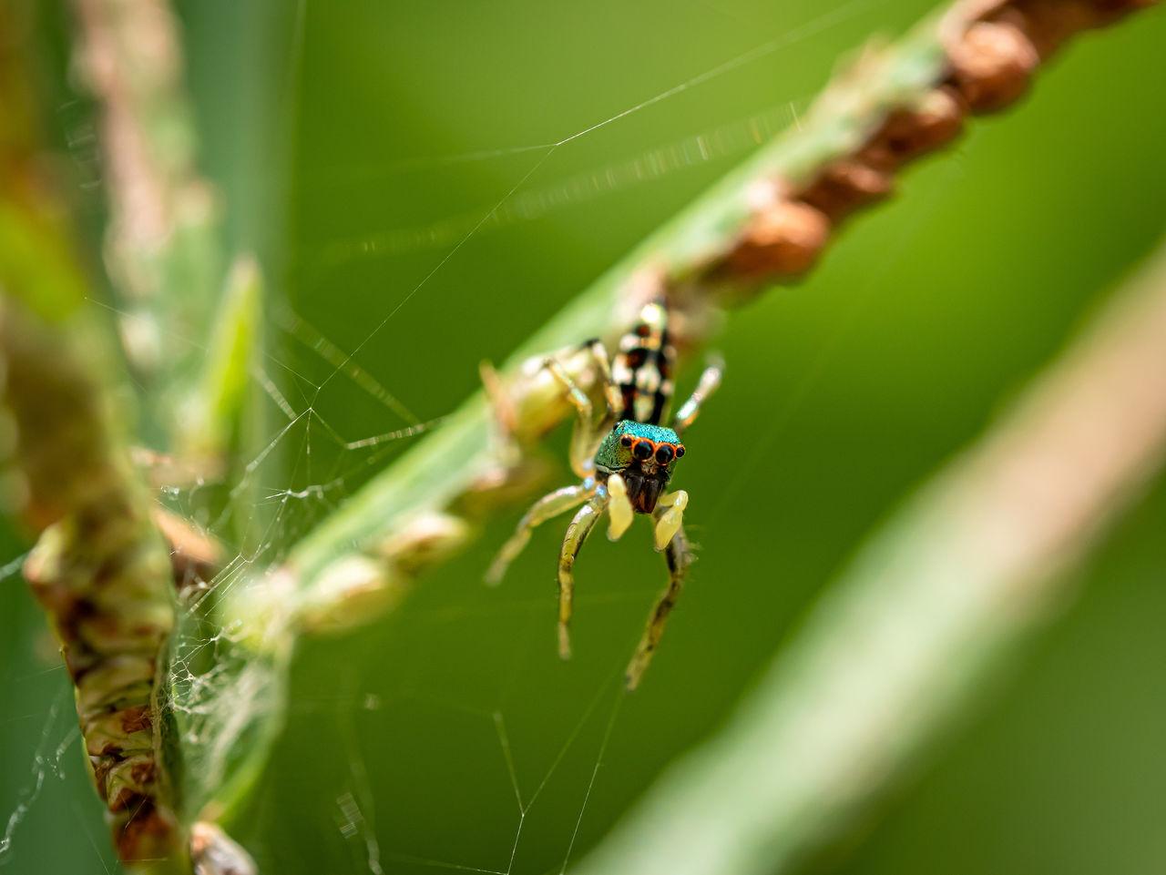 Close-up spider web