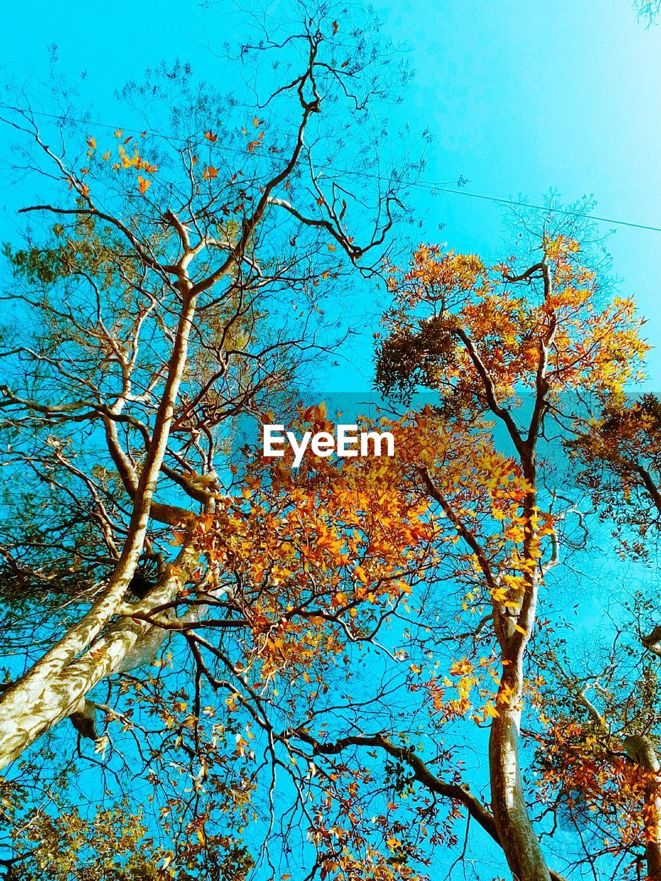 CLOSE-UP LOW ANGLE VIEW OF TREE AGAINST BLUE SKY