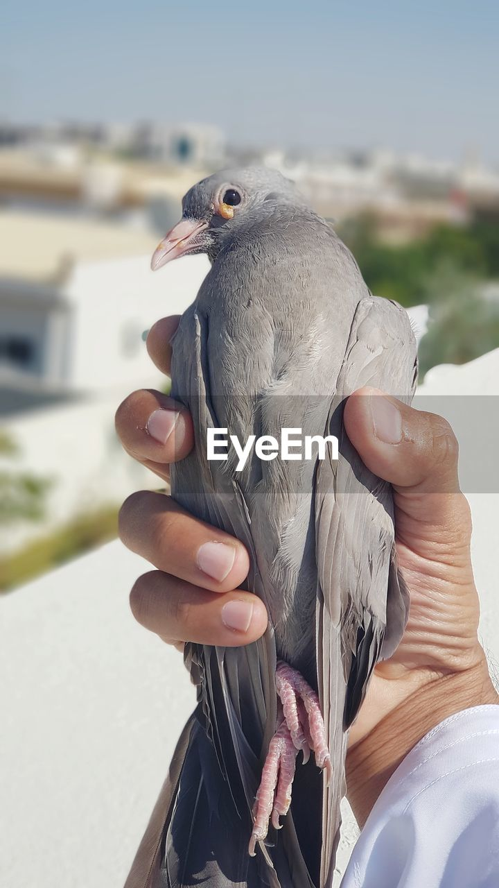 CLOSE-UP OF PERSON HAND HOLDING BIRD