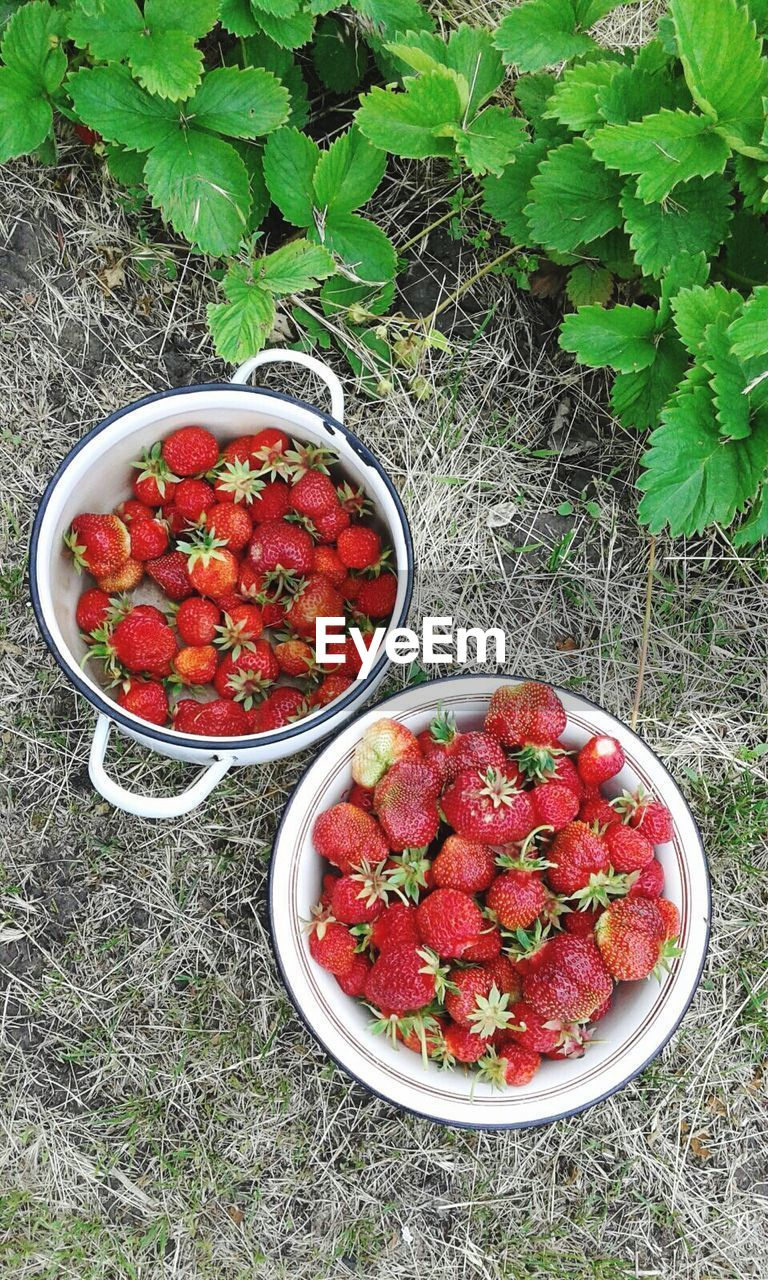red, healthy eating, bowl, food and drink, fruit, strawberry, freshness, high angle view, food, raspberry, no people, directly above, outdoors, growth, day, ready-to-eat, close-up