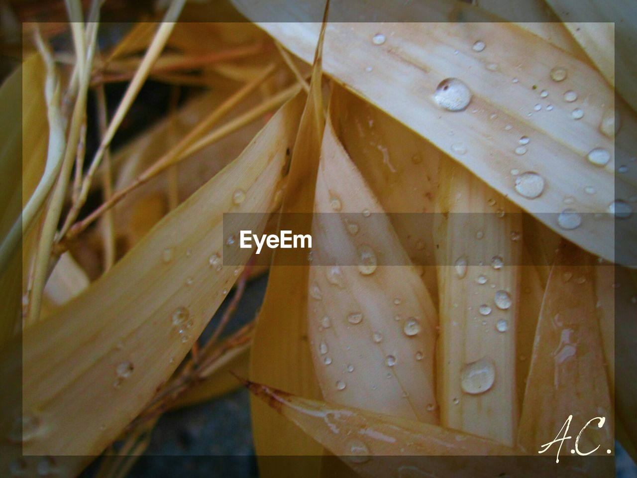 drop, wet, water, rain, weather, leaf, nature, close-up, raindrop, outdoors, beauty in nature, fragility, day, no people, freshness