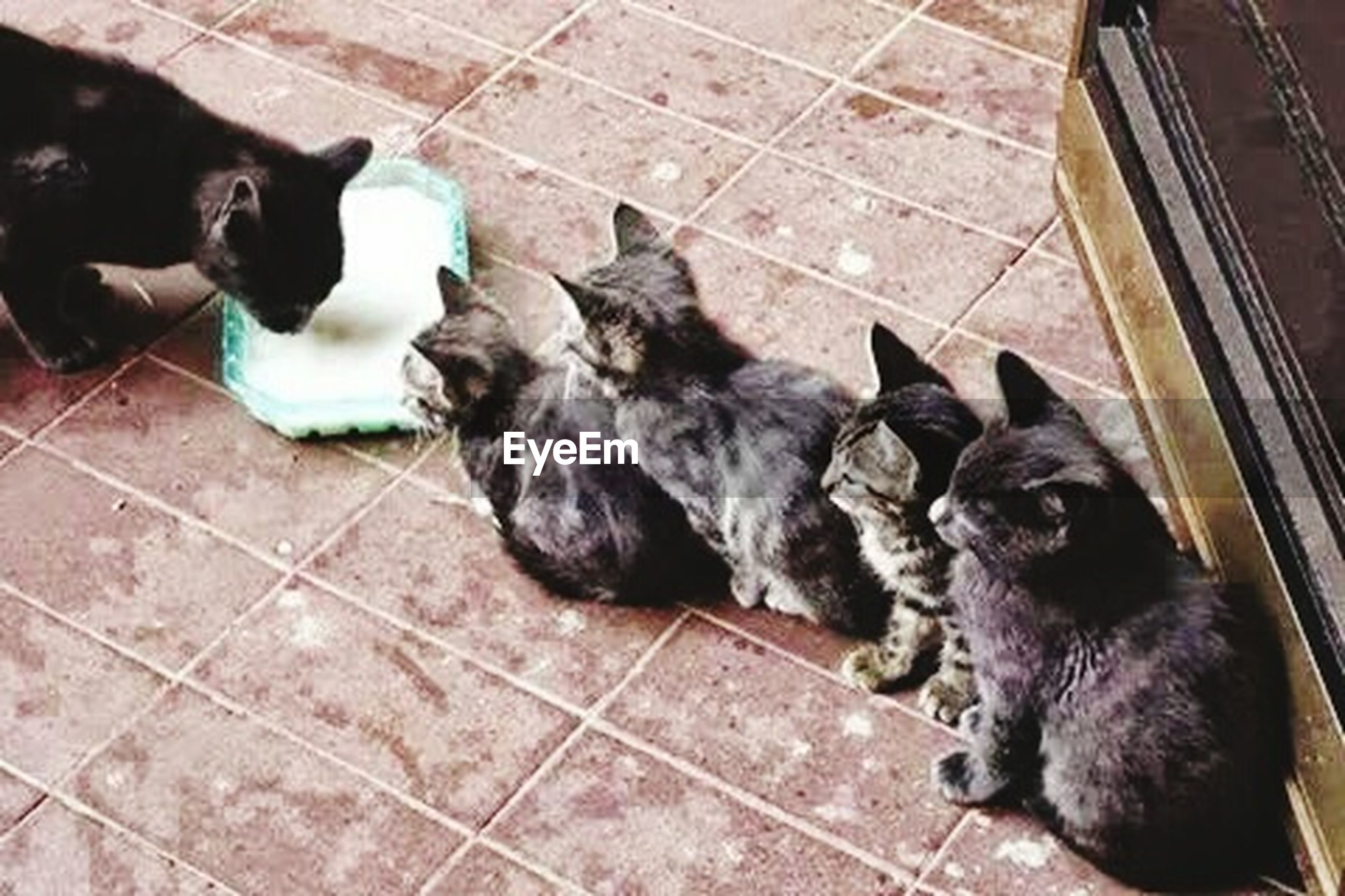 animal themes, domestic animals, mammal, pets, one animal, two animals, relaxation, high angle view, togetherness, dog, black color, indoors, lying down, cat, domestic cat, resting, sleeping, sitting, young animal, no people