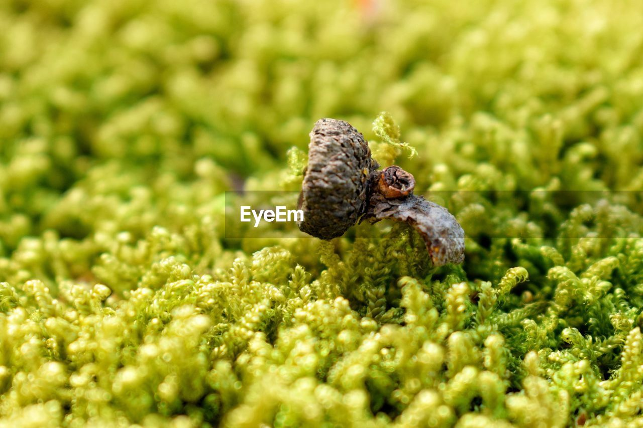 green color, animal themes, animals in the wild, animal wildlife, selective focus, close-up, animal, no people, one animal, plant, invertebrate, nature, day, growth, insect, outdoors, beauty in nature, vertebrate, food, land