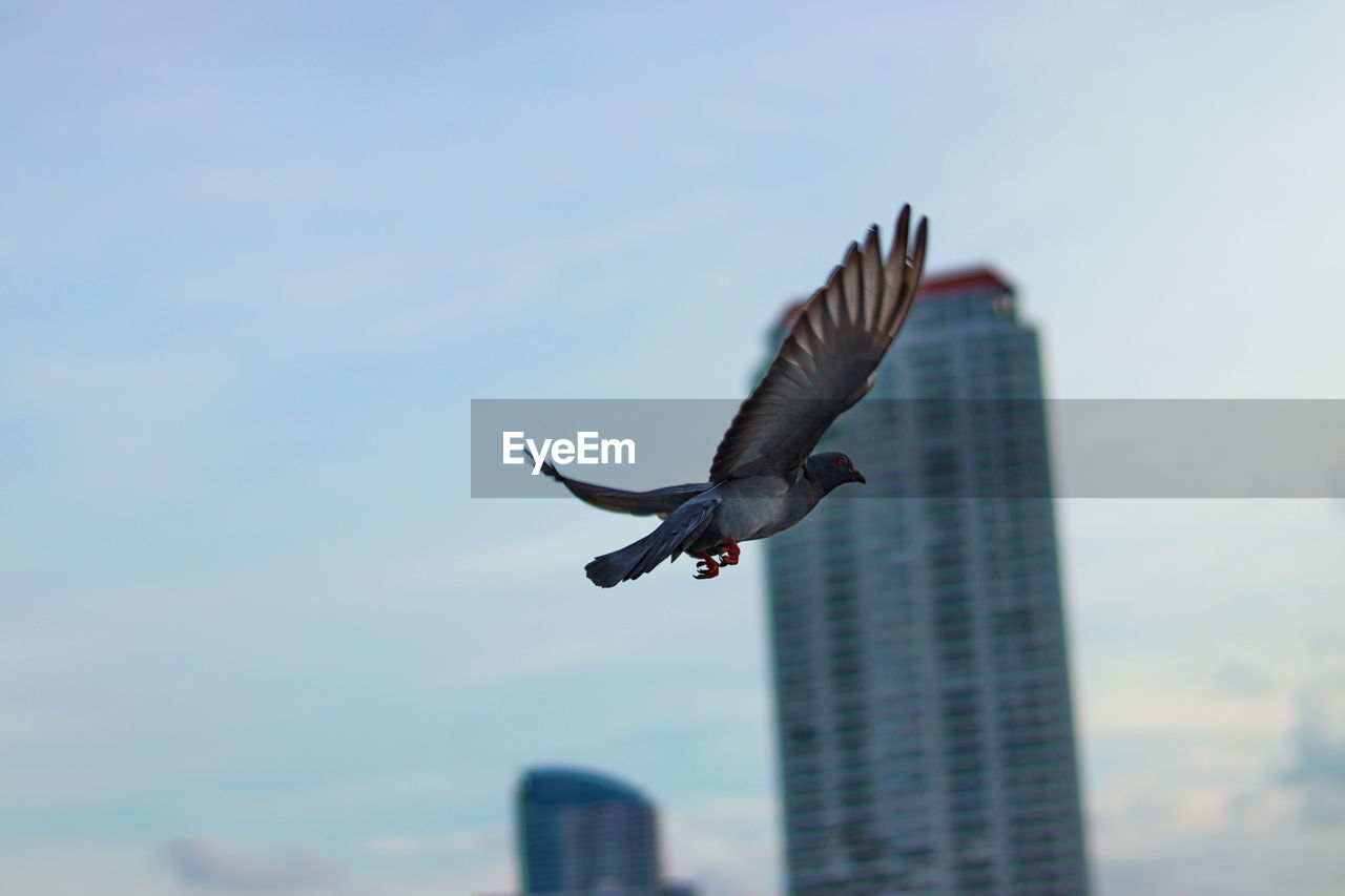 flying, spread wings, animal themes, animal wildlife, animal, animals in the wild, vertebrate, bird, mid-air, sky, architecture, one animal, built structure, low angle view, building exterior, no people, nature, motion, day, outdoors, seagull, skyscraper