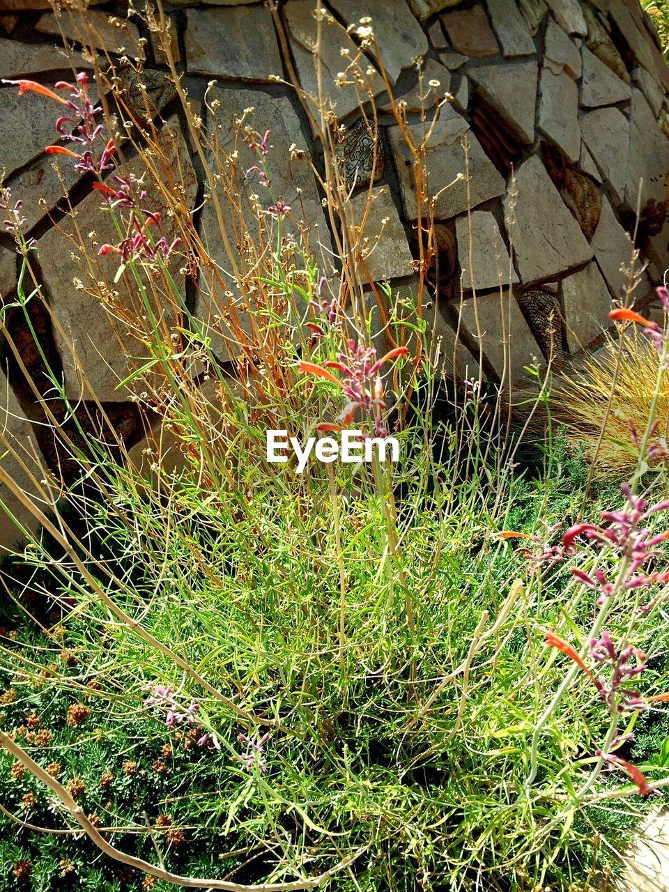 High angle view of plants