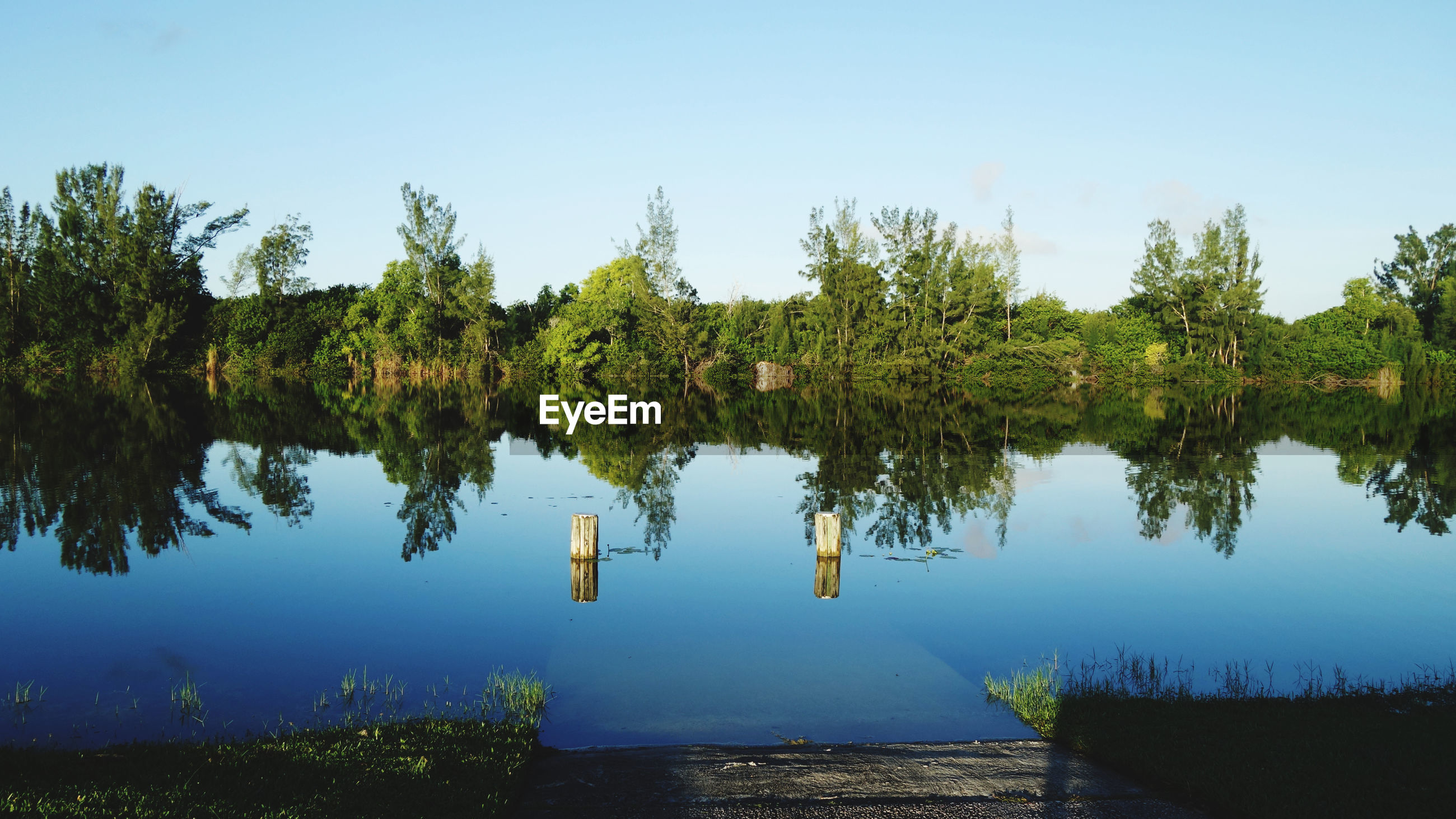 Panoramic view of trees on lake against sky