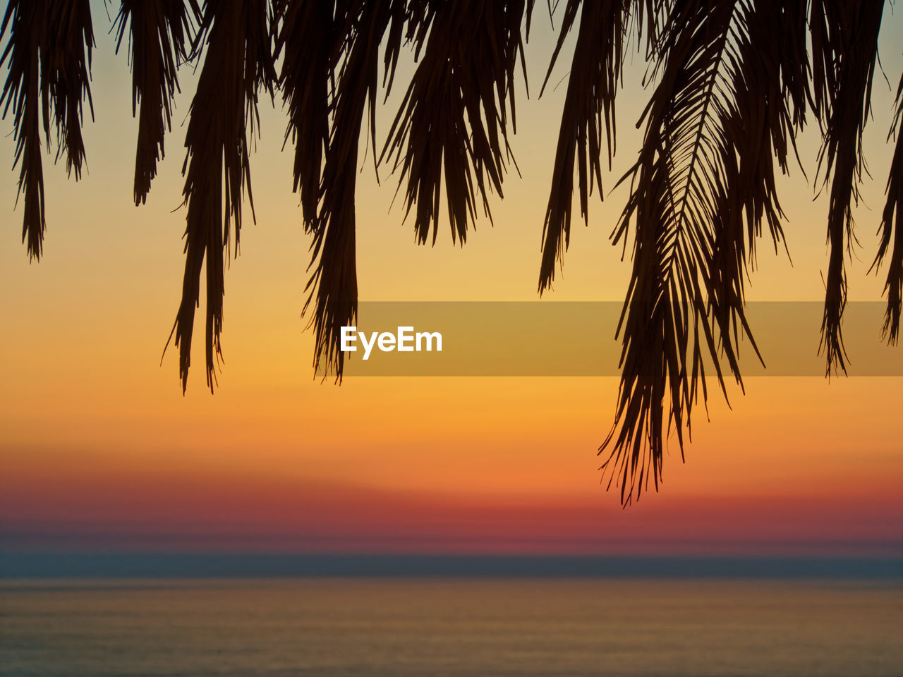 sunset, sky, beauty in nature, water, scenics - nature, sea, horizon over water, tranquility, orange color, horizon, tranquil scene, tree, nature, silhouette, plant, no people, idyllic, palm tree, tropical climate, outdoors, palm leaf, romantic sky