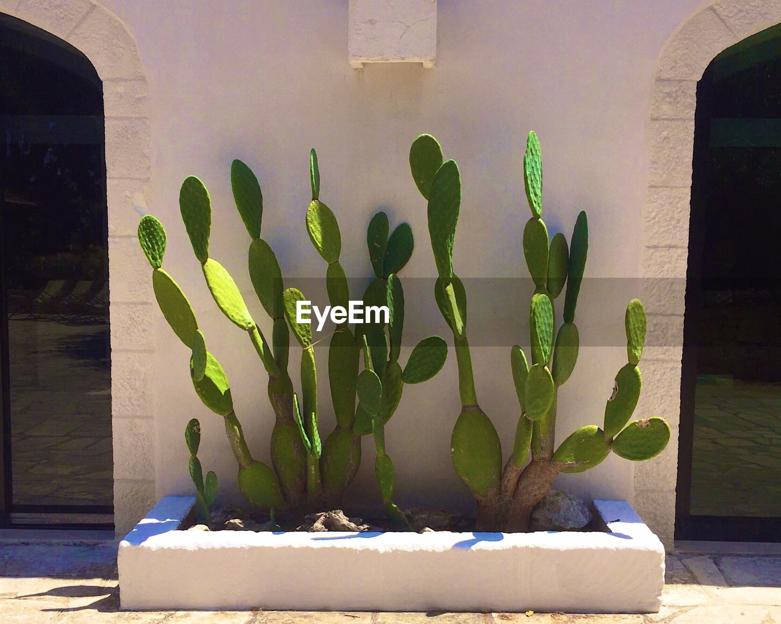 potted plant, plant, growth, leaf, wall, green color, front or back yard, no people, day, nature, green, growing, close-up, empty