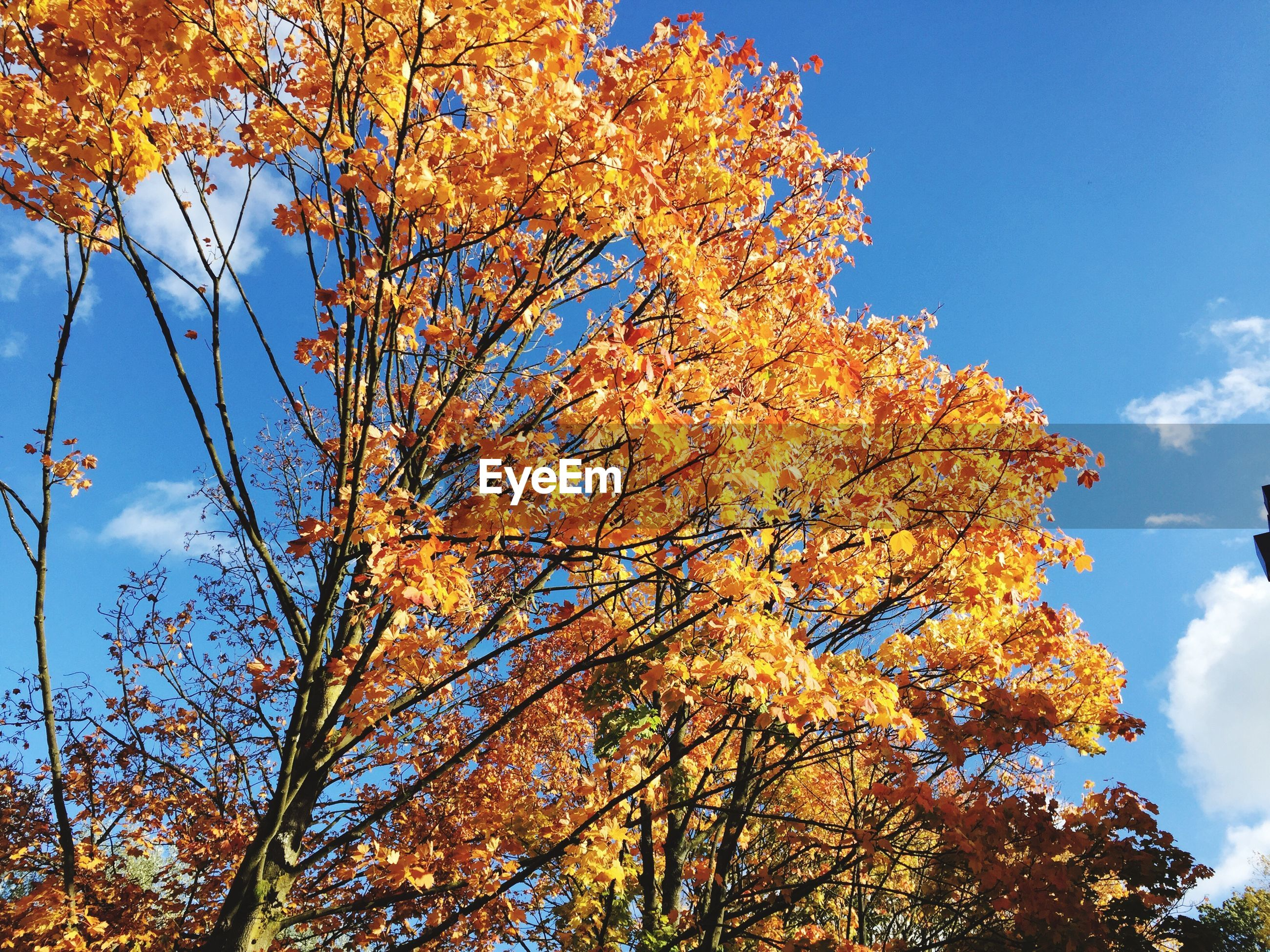 Low angle view of autumn trees against sky