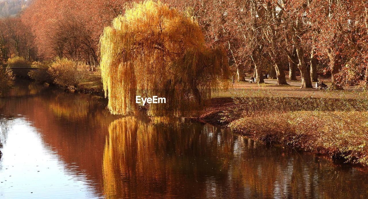 tree, reflection, nature, tranquility, water, lake, tranquil scene, autumn, beauty in nature, scenics, waterfront, no people, outdoors, growth, willow tree, forest, grass, day, landscape